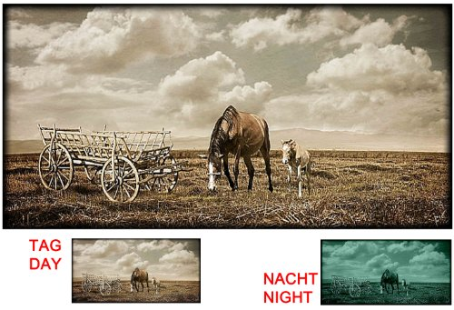 startonight-glow-in-the-dark-photo-sur-toile-chevaux-dans-un-champ-noir-blanc-120-x-60-cm