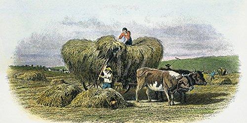 Artland Poster oder Leinwand-Bild fertig aufgespannt auf Keilrahmen mit Motiv Unbekannter Künstler Amerikanische Farm aus dem 19. Jahrhundert, um 1870 Menschen Berufe Graphische Kunst Grün C4GY