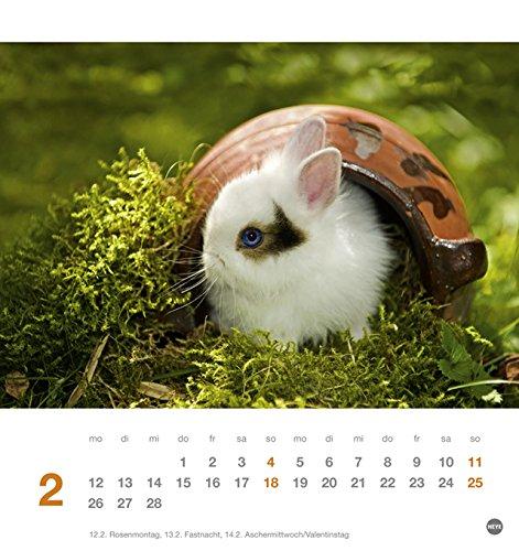 Kaninchen Postkartenkalender – Kalender 2018 - 3