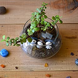 myBageecha-Three Jaded Panda Succulent Glass Terrarium Live Plants Planter DIY Kit Miniature Home Decoration Garden