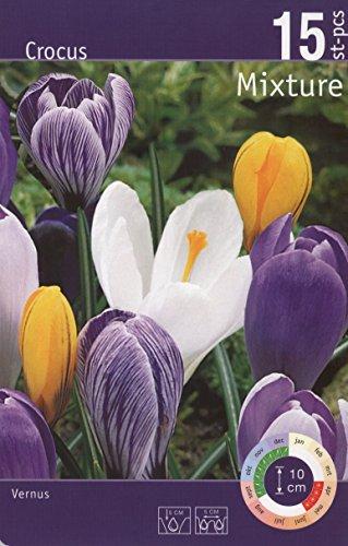 Produkt-Bild: Amazon.de Pflanzenservice 30 Zwiebel Großblumige Krokusse, Mischung, Zwiebelgröße 8/9, Blumenzwiebeln, winterhart