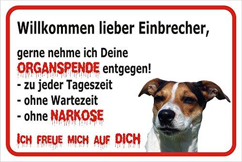 Schild Vorsicht Jack Russell Terrier - Willkommen lieber Einbrecher (20x30cm)