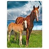 Violetpos Dick Decke Weich Wärme Gemütlich Flanell-Fleece Sofadecke Deckeldecke Zwei Pferde Stehen Auf Dem Gras Blauer Himmel 150 x 200 cm