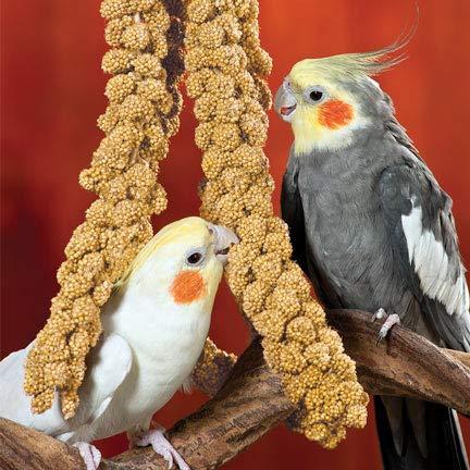 Leo Steel Canary Seeds for Bird Food (400 g)