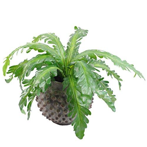 Leaf Foglia 50cm Artificiale in Vaso Pavone Felce pianta