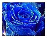 Rosa azul - 10 semillas