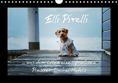 elli-pirelli-aus-dem-leben-eines-frohlichen-pinscher-dackel-madels-wandkalender-2017-din-a4-quer-aus