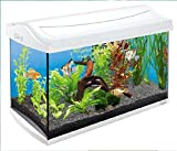 Tetra AquaArt Aquarium Discovery Line