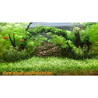 400 l Water Plant Set meadow with bridge (22) 400 l Water Plant Set meadow with bridge (22) 51LQS1ZXKlL