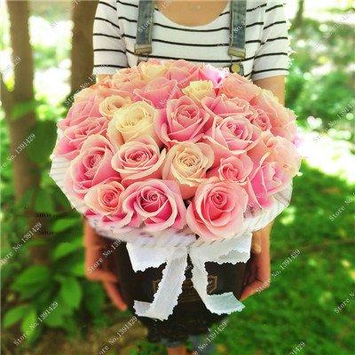 Exotique Rosas / Rose semences vivaces Jardin des plantes Bonsai Fleur, Pots de fleurs Pots décoratifs Landscaping 120 Pcs / Sac 15