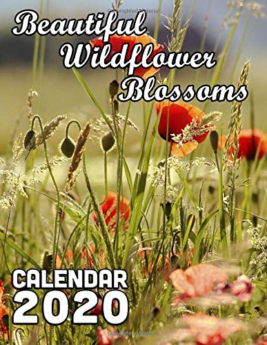Beautiful Wildflower Blossoms Calendar 2020: 14 Month Desk Calendar Showing the Beauty of Natural Flowers Found in Nature