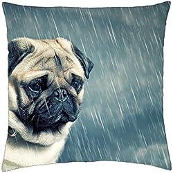 CARLINO en la lluvia - Funda de cojín