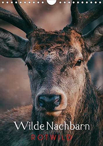Wilde Nachbarn: Rotwild (Wandkalender 2020 DIN A4 hoch): Sie leben tagtäglich unter uns, dennoch sehen sie nur wenige Menschen so wie auf diesen ... (Monatskalender, 14 Seiten ) (CALVENDO Tiere)