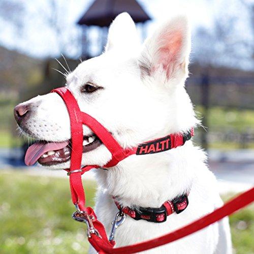 Halti Hundehalfter in Größe 3 (rot) - 6