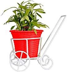 TrustBasket Trolly with Red Plastic Planter and Lucky Bamboo Plant