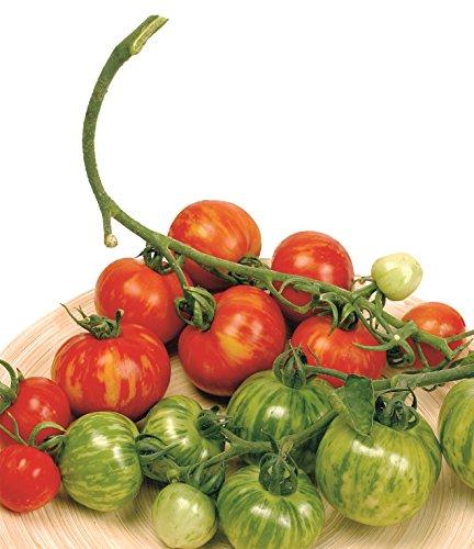 Just Seed Gemüse Tigerella-Tomaten, 100 Samen Wirtschaft Pack