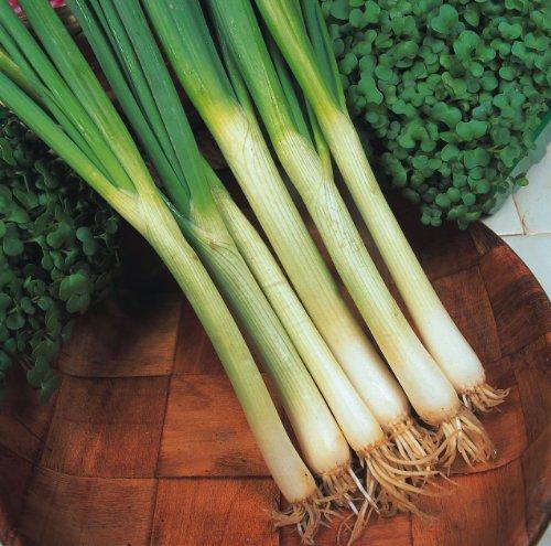JustSeed - Vegetable - Spring Onion - White Lisbon - 800 Seeds - Economy Pack