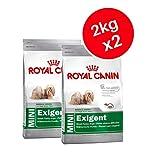 Royal Canin Mini Exigent, Erwachsene Trockenfutter für Hunde 2kg (2Stück)