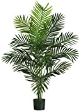 Nearly Natural 5259 Paradise Artificial Palm Trees , 5-Feet, Green by Nearly Natural