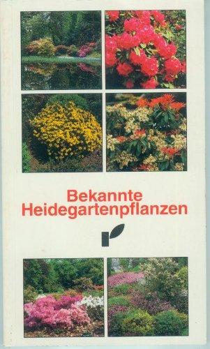 Rainfarn Blumen (Bekannte Heidegartenpflanzen [Caisse])