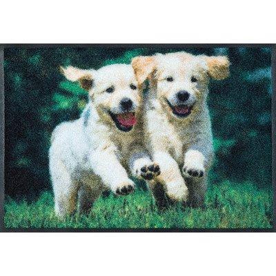 Felpudos Perros  (50x 75cm Lavable perro Felpudo