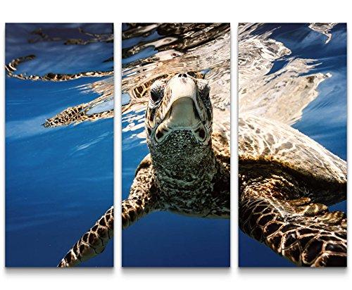 Paul Sinus Art Leinwandbilder | Bilder Leinwand 130x90cm Schildkröte Unter Wasser