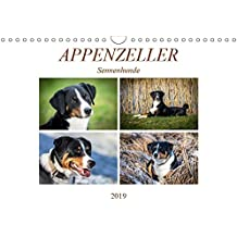 Appenzeller Sennenhunde (Wandkalender 2019 DIN A4 quer): Familienhunde (Monatskalender, 14 Seiten ) (CALVENDO Tiere)