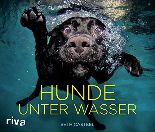 hundeinfo24.de Hunde unter Wasser