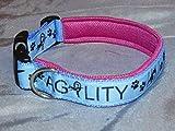 Hunde Halsband Agility Hellblau