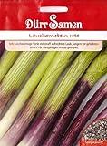 Rote Lauchzwiebeln, Allium fistulosum, ca. 200 Samen