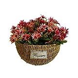 piantatore sospeso fissato al muro, seagrass naturale ha appeso il vaso di fiore d'attaccatura del cestino di fioriera del rattan intrecciato a mano decorativo della porta di arte della parete
