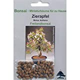 Bonsai - 30 Samen von Malus halliana, Zierapfel, 90011