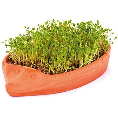 tomgarten Römertopf Kresse-Igel   mit Samen und Gebrauchsanweisung   Komplettset zur Anzucht   Ton   24 x 14 x 4 cm