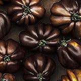 Go Garden 300pcs Schwarze Tomate SEHR SELTEN nährende Niere und Bleaching Haut Heide Gemüse Gartenbonsai