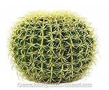 künstlicher Goldkugelkaktus, Durch. 37cm - künstlicher Kaktus Kakteen Kunstkakteen Kakteen für Gastronimie und Eventeinrichtungen Kaktus aus Kunststoff -> großes Sortiment an künstlichen Kakteen