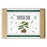 Bonsai Box: Saatgut und Samen für den Garten / Bonsai Baum, Anzucht