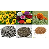 Alkarty Sunflower Zinnia and Marigold Seed (Black, Pack of 60)