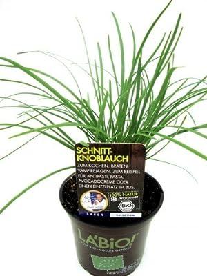 Bio Schnittknoblauch Kräuterpflanze von LÀBiO! Kräuter auf Du und dein Garten