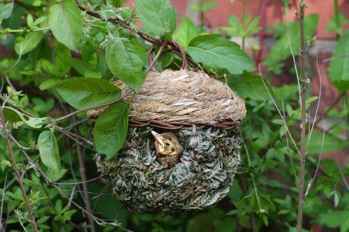 Solus Chapelwood Reed Weave Natural Roosting Pocket 2