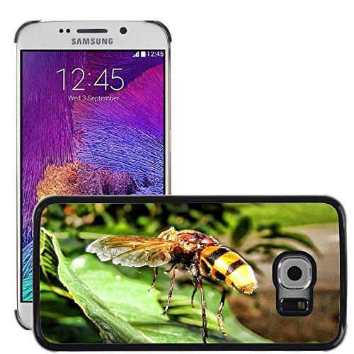 Carcasa Funda Prima Delgada SLIM Casa Case Bandera Cover Shell para // M00130125 Vespa Insect Yellow Jacket Sting // Samsung Galaxy S6 EDGE (Not Fits S6)