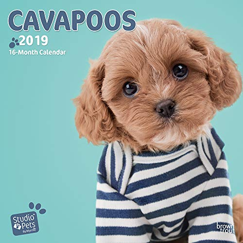 CAVAPOOS BY STUDIO P 2019 SQUARE WALL CA por BROWNTROUT UK