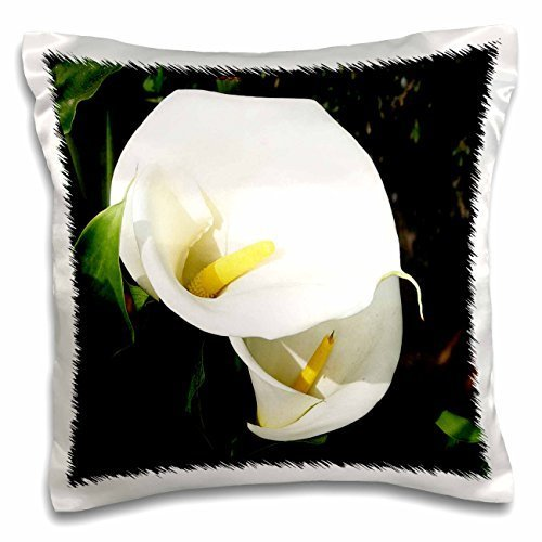 taiche-photography-calla-lilies-white-calla-flowers-in-bright-sunlight-the-stunning-blooms-of-calla-