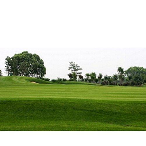 200 graines / Paquet vert Source gazons herbe Graines Graines Evergreen Lawn