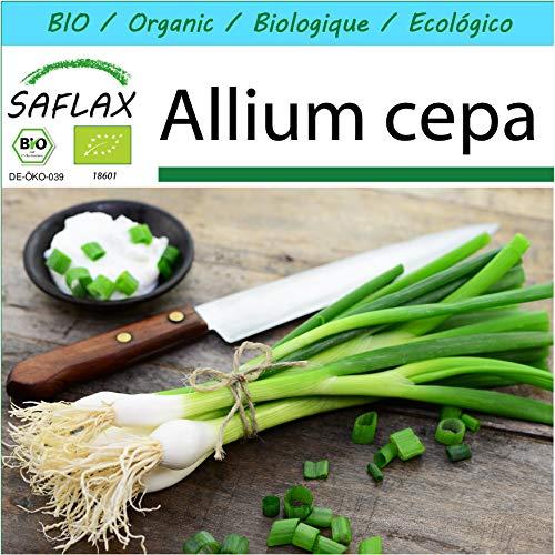 SAFLAX - Geschenk Set - BIO - Frühlingszwiebel - Weißer Lissabonner - 150 Samen - Mit Geschenk- / Versandbox, Versandaufkleber, Geschenkkarte und Anzuchtsubstrat - Allium cepa