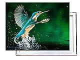 Eisvogel im Wasser - 80x60 cm - Bilder & Kunstdrucke fertig auf Leinwand aufgespannt und in erstklassiger Druckqualität