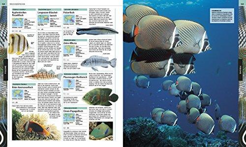 Tiere: Die große Bild-Enzyklopädie mit über 2.000 Arten - 7