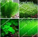 Misch 100 Samen / pack Pflanzen Aquarium Aquarium Dekoration Grassamen Aquarienpflanzen Samen