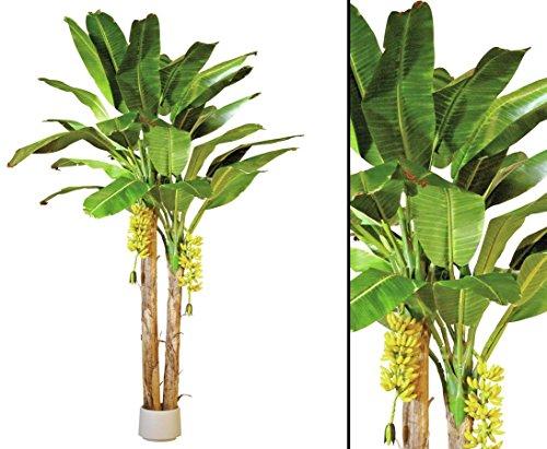 Bananen Baum künstlich, mit 29 Textilen Blätter auf 2 Stämmen, Höhe ca. 440cm – Kunstbäume Dekobäume tropische Pflanzen