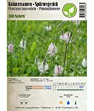 jungepflanzen Kräutersamen - Wegerich - Plantago lanceolata - Verschiedene Sorten(Spitzwegerich)