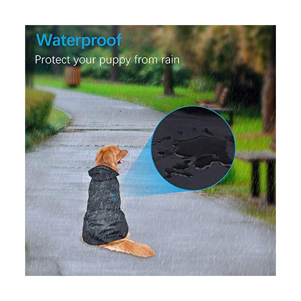 Zellar Dog Raincoat 5